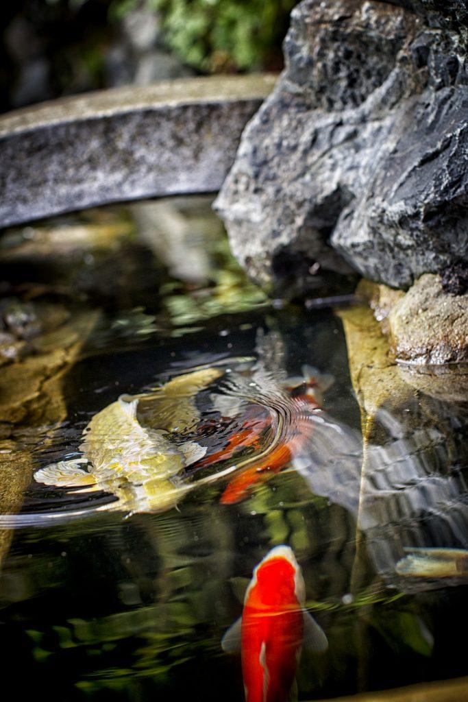 Création Jardin japonnais japon tsuboniwa tsukubai  aménagement extérieur  zen Balcon aménagé Cours végétale Toit immeuble végétal  Style japon  Quietude jardin repos jardin zen Jardin sec Jardin de thé  kare sansui taille en nuage niwaki